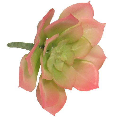 Суккулент 8 х 4,5 см цвет зелено-розовый