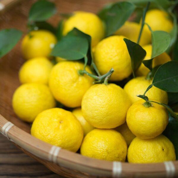 Юзу (японский лимон)