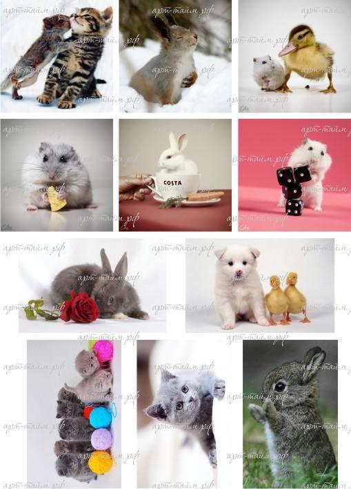 Животные №1